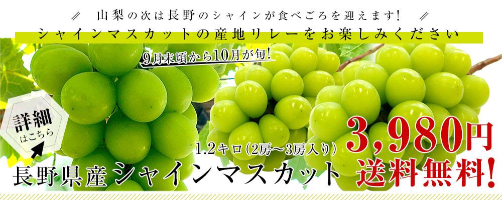 長野県産シャインマスカット