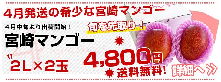 4月の宮崎マンゴー