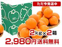 オレンジ4kg